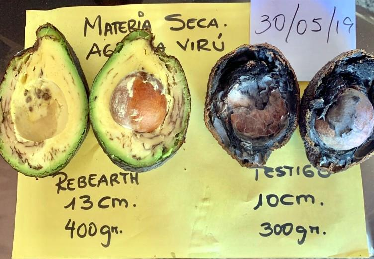 Increased avocado production and quality in Peru